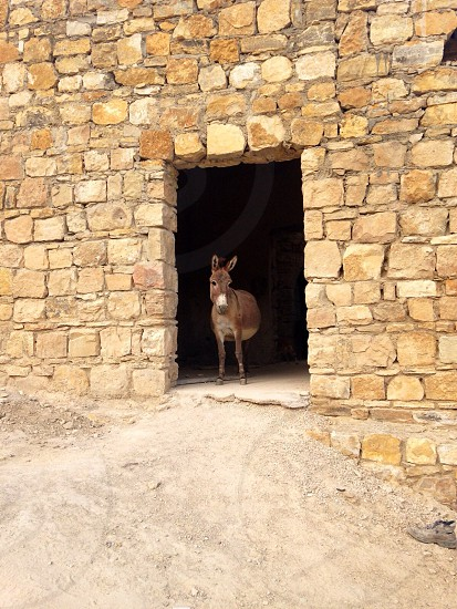 donkey in doorway photography photo