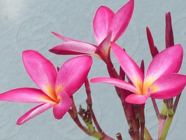 Flowers beauty photo