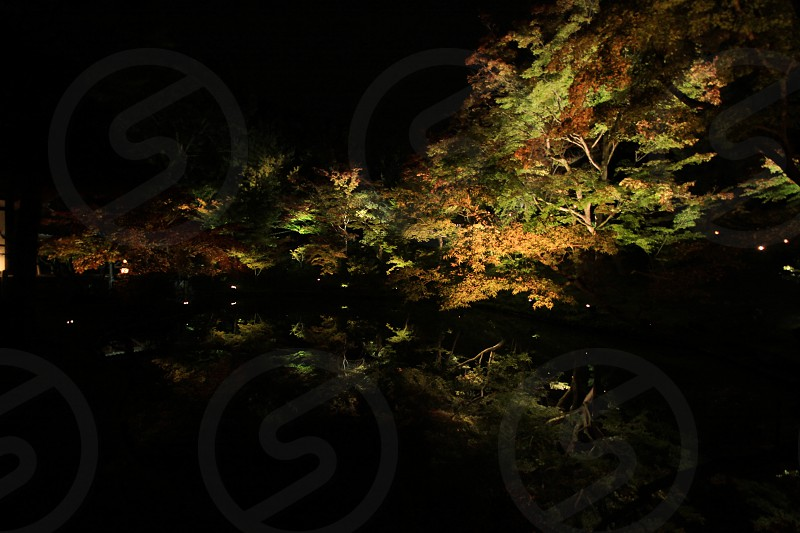 Japan Kyoto photo