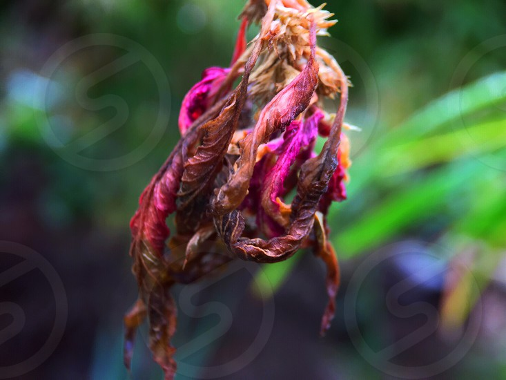 color colorful macro nature flower outdoors plant photo