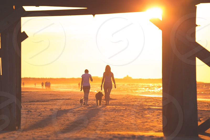 Walking the dogs on the beach at dawn photo