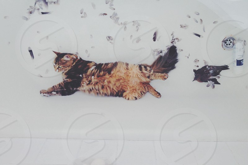 brown and black haired cat laying on snow covered ground photo
