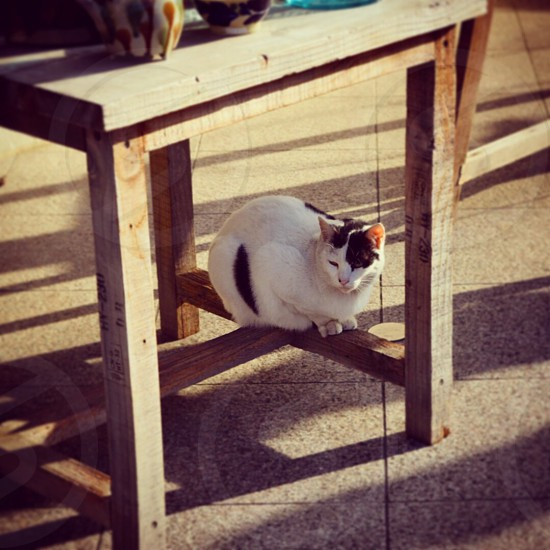 calico cat sitting  on lower brace of square wood table photo