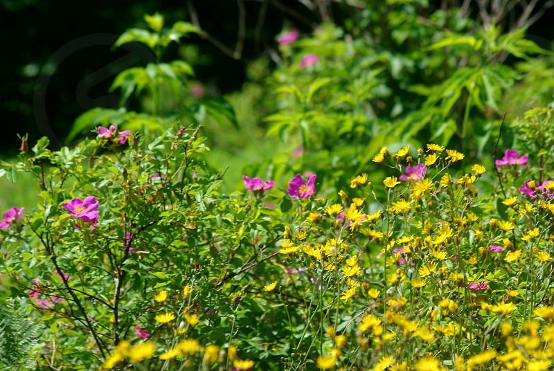 Wild flowers in full sun photo