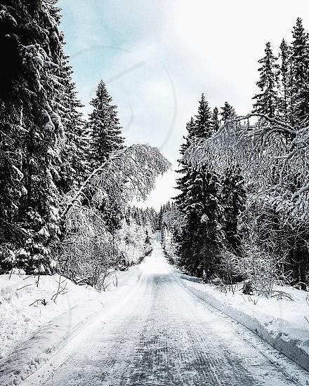 Norway north winter wonderland magical nature photo
