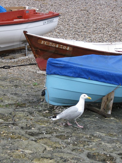 Seagull Boats Seaside France photo