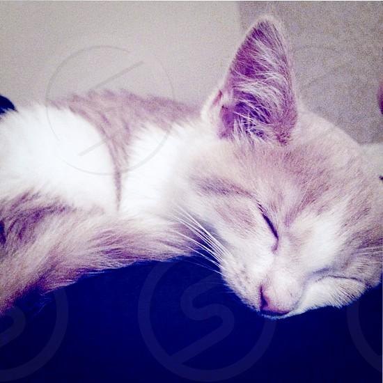 Lazy cat.. photo