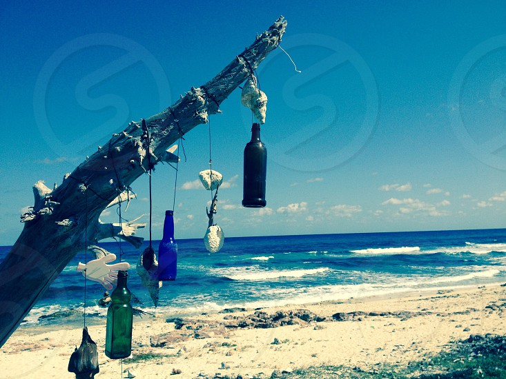 blue green and black bottles under gray tree branch near beach and ocean under blue sky photo