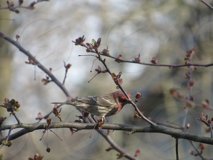 grey and red bird on brown tree branches with red flower photo
