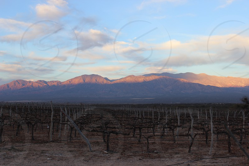 wine plantation in cafayate salta argentina next to andes mountains at back photo
