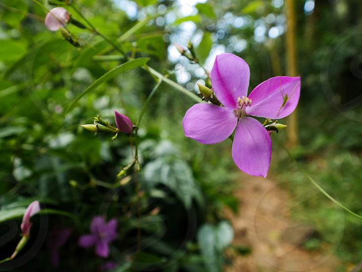 Purple flower in nature  photo