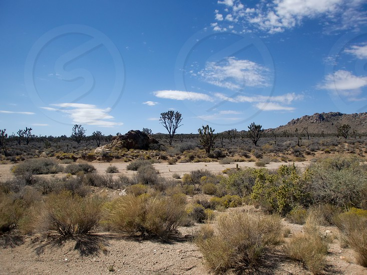 Mojave National Preserve about 60 miles from Las Vegas  and 60 miles from Barstow. Kelso is in the middle and used to be a stop for the steam trains to fill up on water. photo