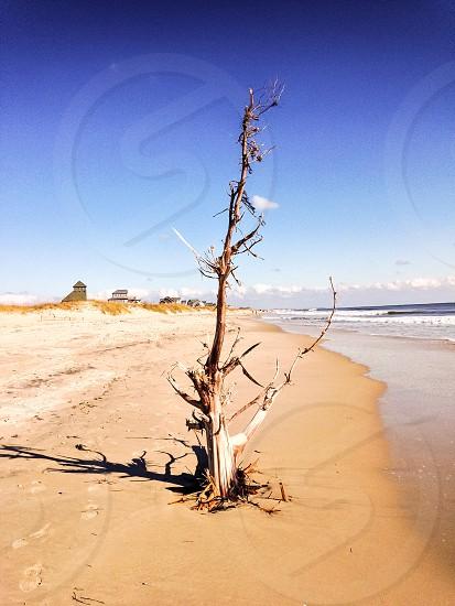 Tree Beach Sand Ocean photo