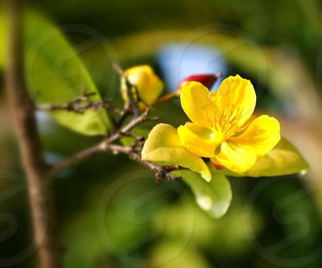 Tiny flower along the road in Cebu Province photo