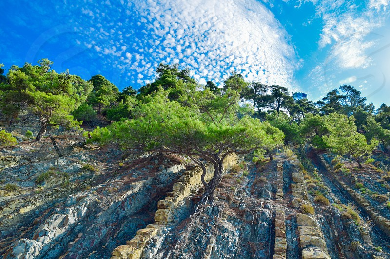 green trees growing on side of some rocks with blue cloudy sky photo