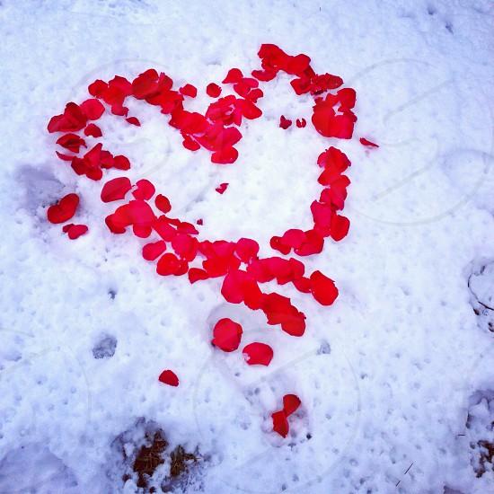 Rose petal heart photo