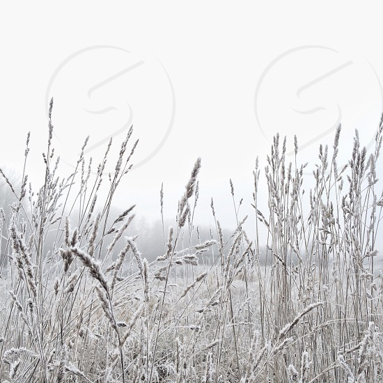 plant covered with snow photo