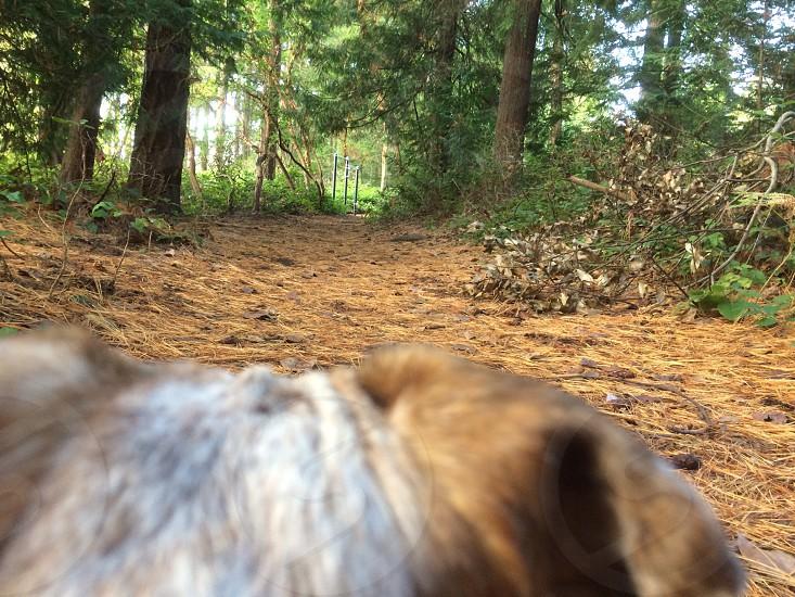 The trail photo