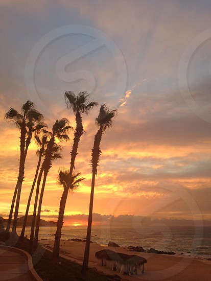 Reaching palms at sunrise on Cabo beach. photo