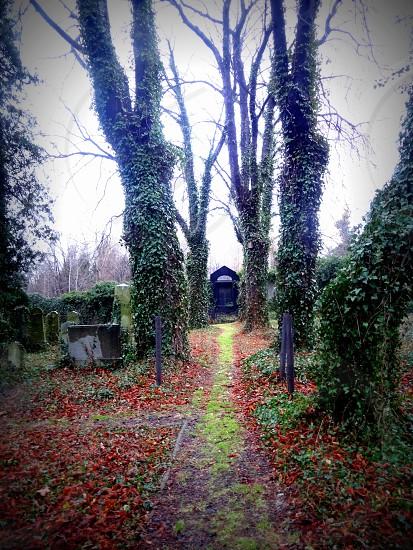 Jewish cemetery  photo