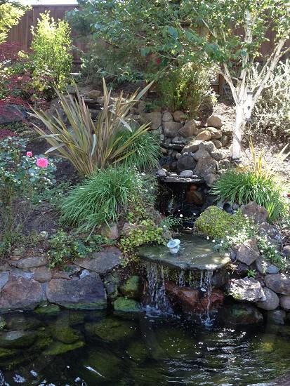 Zen Peace photo