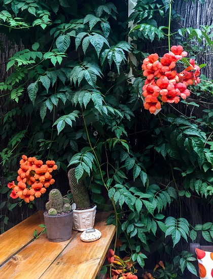 Orange afternoons photo