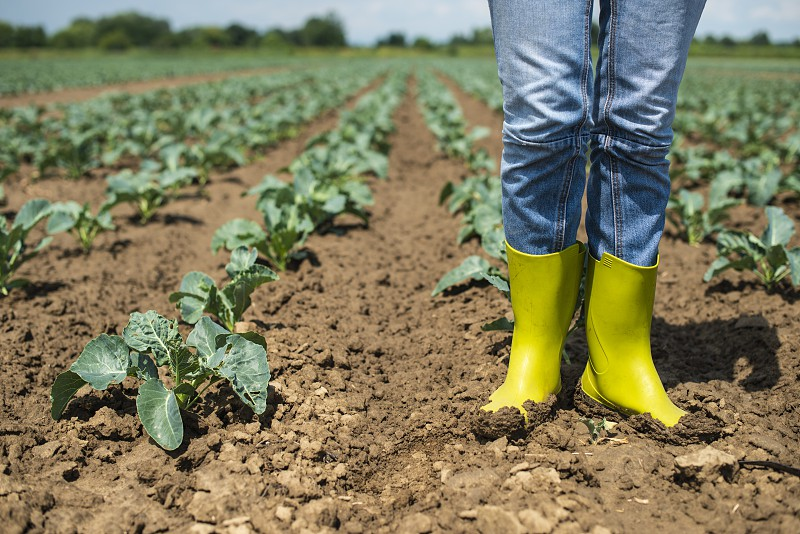Woman with boots on cabbage plantation. Agriculture concept with farmer. photo