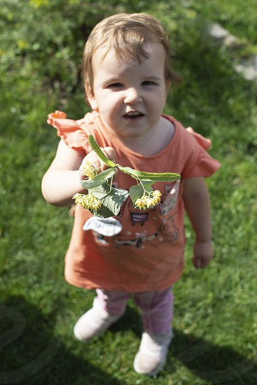 Child hold Linden blossom. Green meadow. Sunny day photo