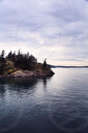 pine tress on seashore photo