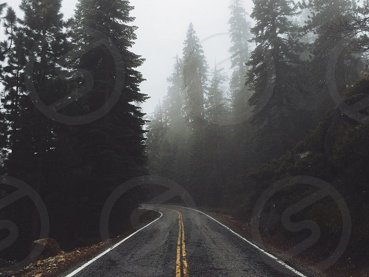 grey fogs over highway lined with trees photo