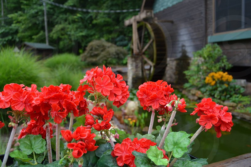 Flowers and a water wheel photo