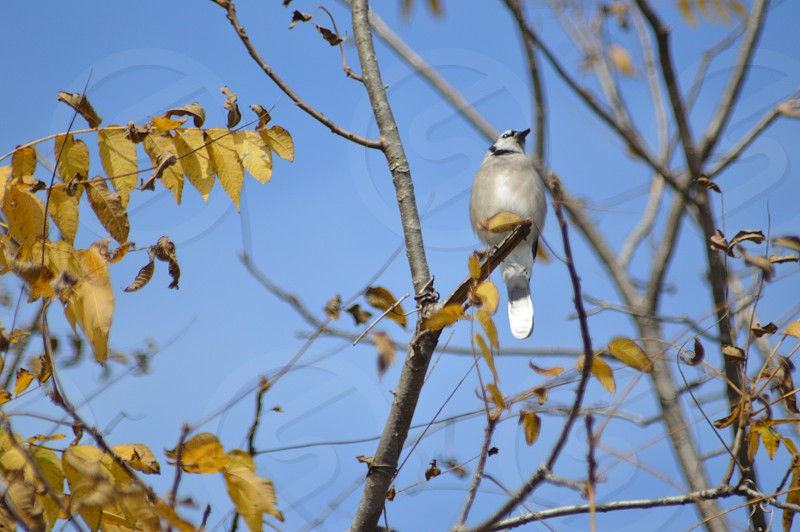 white and gray bird on tree photo