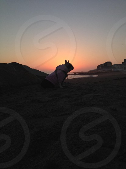 Silhouette of doggie at sunset at the beach  photo