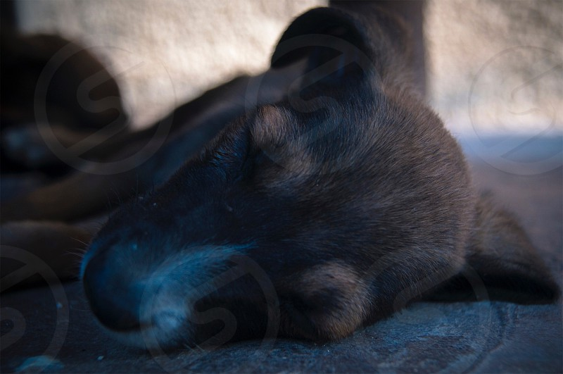 Perro mestizo durmiendo. photo