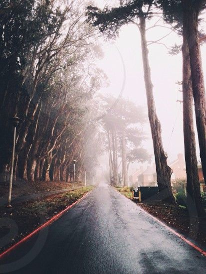 blacktop road on foggy day photo