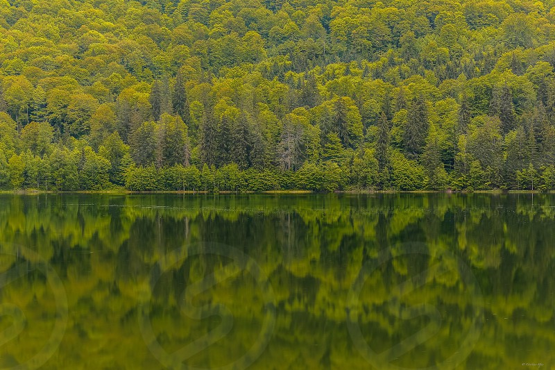 green leaf tree reflected on calm lake during daytime photo