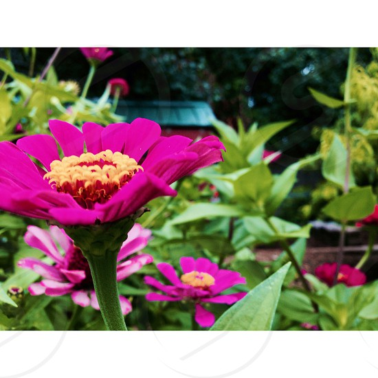 flowers garden green landscape landscaping beauty beautiful colors bright pink photo