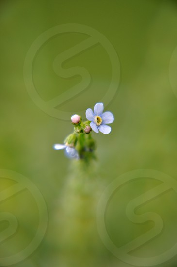 Small flower at Eaglesmere Lakes Colorado photo