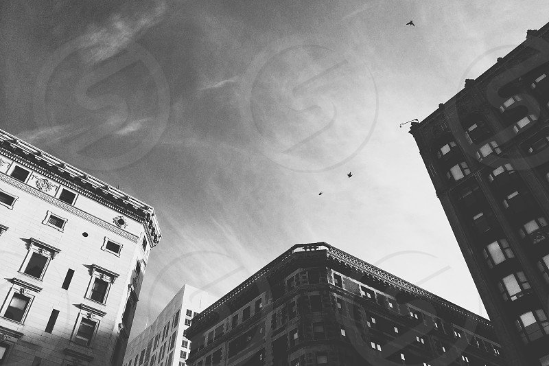 grayscale photograph of buildings photo
