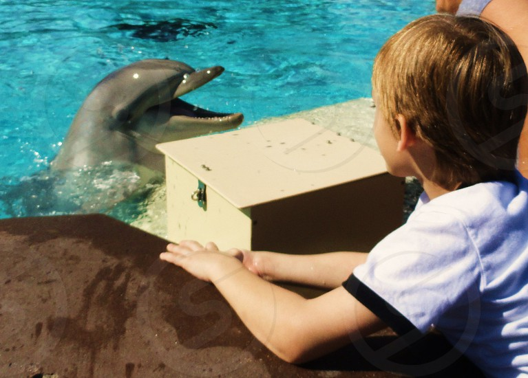 talking to dolphins photo