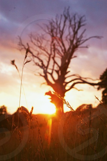 Sunset tree. Edited in lightly with the Linen preset + slight vignette photo