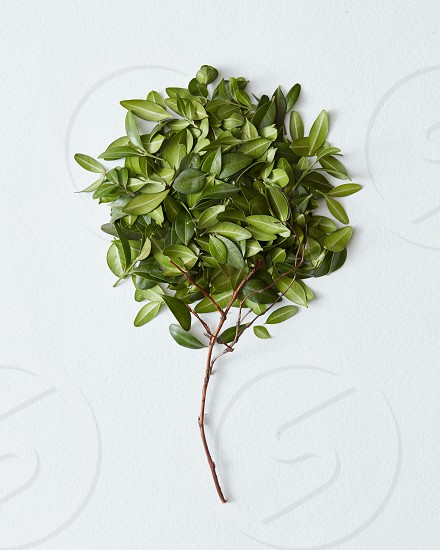 Decorative tree with green leaves over white background photo