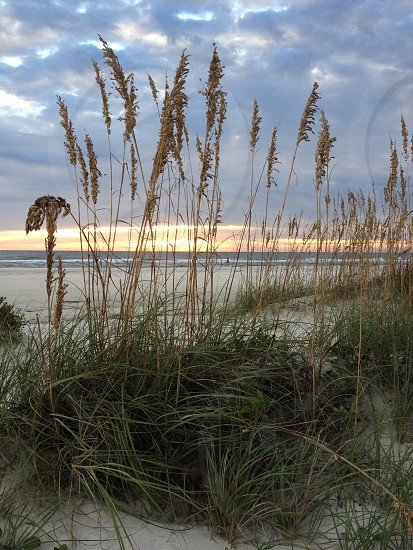 sunrise and sea oats  photo