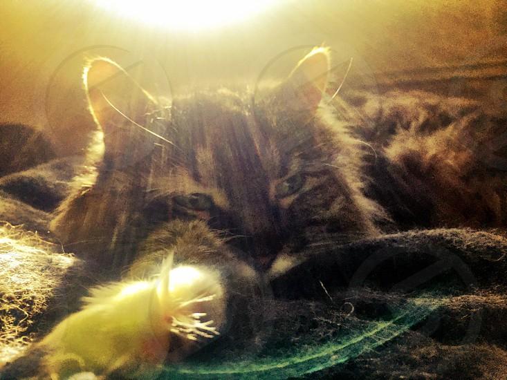 Sunshine cat morning love precious  photo