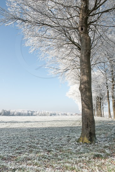 Winter landscape with trees field and frosty blue sky. photo