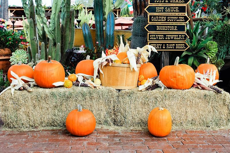 Halloween decoration along a street in San Diego photo