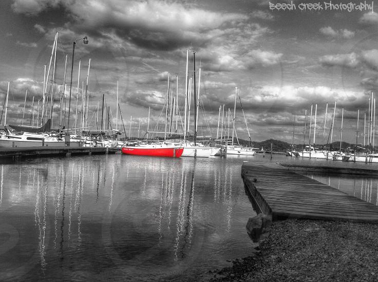 black and white dock portrait photo