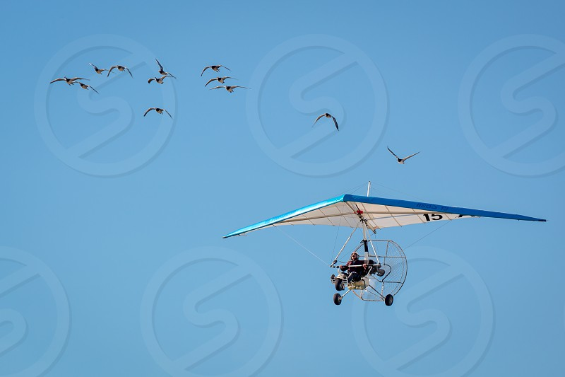 Christian Moulec and his Geese photo