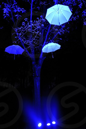 Blue light on umbrellas flying on trees an artistic installation in Monza Park Milan Italy photo