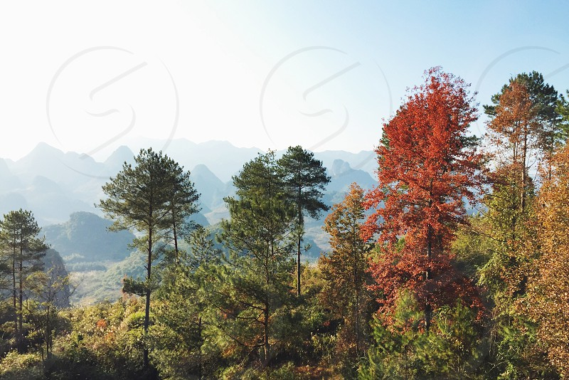 travel·forest photo